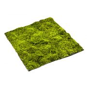 Estera de musgo sphagnum artificial FERMIN, verde, 100x100cm
