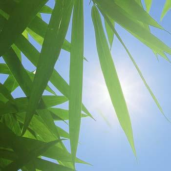 Plantas artificiales con proteccion uv